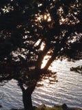 krusig vatten- och trädblast Arkivbild