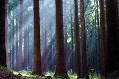 Krusne hory, CZ, EU. Forest in Czech Republic - Krusne hory, Bohemia Royalty Free Stock Photos