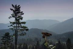 Krusne hory, CZ, EU Stock Images
