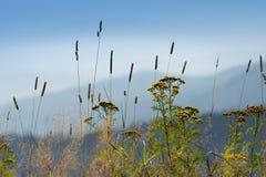 Krusne hory, CZ, EU. Mountains in Czech Republic - Krusne hory, Bohemia Royalty Free Stock Images