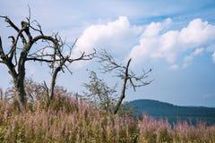 Krusne hory, CZ, UE Imagem de Stock Royalty Free