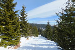 Krusne hory góry, republika czech Fotografia Stock