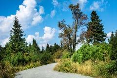 Krusne hory, Klinovec, CZ, UE Fotos de Stock
