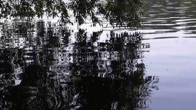 krusningar på sjön på sommar Bakgrund natur stock video