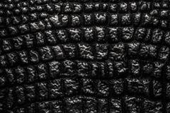 kruszcowa tekstura lubi krokodyl skórę rzemienna obrazy royalty free