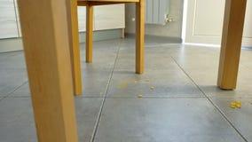 Kruszki spadają na podłodze pod stołem blisko lily farbuje miękki na widok wody Brud na kuchennej podłodze zbiory wideo