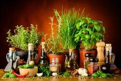 Kräuter, Gewürze und Olivenöl Lizenzfreies Stockbild