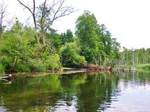 Krutynia-Fluss 1 Stockfoto