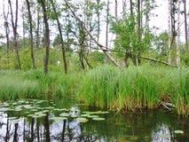 Krutynia-Fluss 5 Lizenzfreie Stockfotos