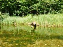 Krutynia-Fluss 12 Lizenzfreie Stockbilder