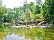 Krutynia-Fluss 15 Lizenzfreies Stockbild
