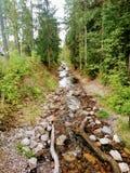Kruununpuisto, Imatra, Finlandia, o Rapid de Imatra fotografia de stock