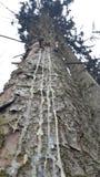 Krwawiący drzewo fotografia royalty free