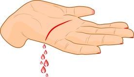krwionośna palma royalty ilustracja