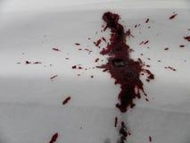 Krwionośna plama na śniegu Zdjęcie Stock