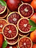 Krwionośne czerwone pomarańcze fotografia royalty free