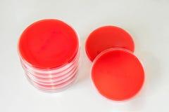 Krwionośny agar (półdupka agar) Zdjęcie Stock