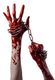 Krwisty ręki mienia łańcuch, krwisty łańcuch, Halloween temat, biały tło, odizolowywający Zdjęcie Stock