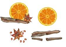 krydda stock illustrationer