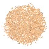 Krydda för senapsgult frö royaltyfri fotografi