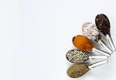 Krydda och örter i stålsked Fotografering för Bildbyråer