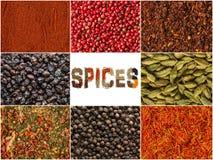 Krydda och ?rter bakgrund, collage av smaktillsatser arkivfoto