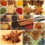 Kryddar collage Royaltyfri Fotografi