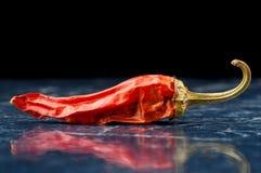 Kryddig chilipeppar med reflexion som isoleras på svart Royaltyfria Foton