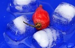 kryddig peppar Arkivbild