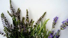 Kryddiga och aromatiska örter Royaltyfri Foto
