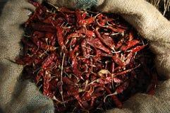 Kryddiga röda chilis Arkivbilder