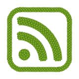 Kryddnejlikan för fyra Leaf av RSS-matning undertecknar in den fyrkantiga ramen Royaltyfri Bild
