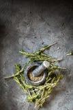 Kryddor för rosmarin för filialgrupp nya Arkivfoton