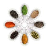 Kryddor i skedarna på den vita vektorn Fotografering för Bildbyråer