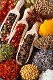 Kryddor och örtar. Arkivbild