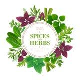 Kryddor och örtbakgrund Ny ört som lagar mat aromatiska växter Indisk matvektorram vektor illustrationer