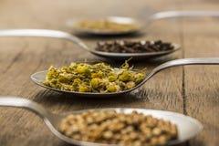 Kryddor och örtteingredienser på skedar Arkivfoto