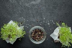 Kryddor och groddar av mikro-gräsplan på en svart bakgrund, tomt utrymme för text arkivbild