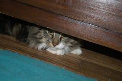 Kryjówka kot Zdjęcia Royalty Free