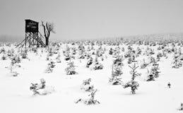 Kryjówka w Zamarzniętym Mglistym Lesie w Zima Krajobrazie obrazy stock