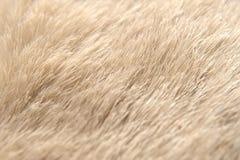 Kryjówka zwierzęcy szczegół Obrazy Royalty Free
