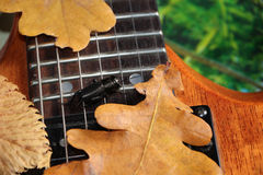 Krykiet i gitara Zdjęcia Stock