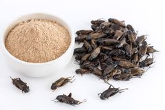 Krykieta prochowy insekt Gryllus Bimaculatus dla jeść jako produkty spożywczy robić gotujący insekta mięso w pucharze na białym t zdjęcie stock