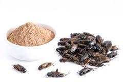 Krykieta prochowy insekt Gryllus Bimaculatus dla jeść jako produkty spożywczy robić gotujący insekta mięso w pucharze na białym t obraz royalty free