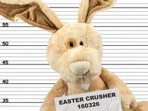 Kryminalny królik zdjęcie royalty free