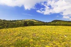 Krymski wiejski krajobraz na Pogodnym letnim dniu Obraz Stock