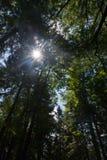 Krynica Gorska Gora Parkowa - colina del parque Foto de archivo