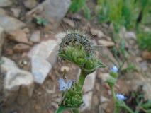 Kryp: En stor larv på överkanten av blomman arkivfoto