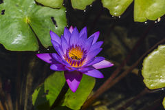 Kryp i blommor Royaltyfria Bilder