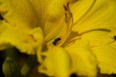 Kryp i blommor Royaltyfri Fotografi